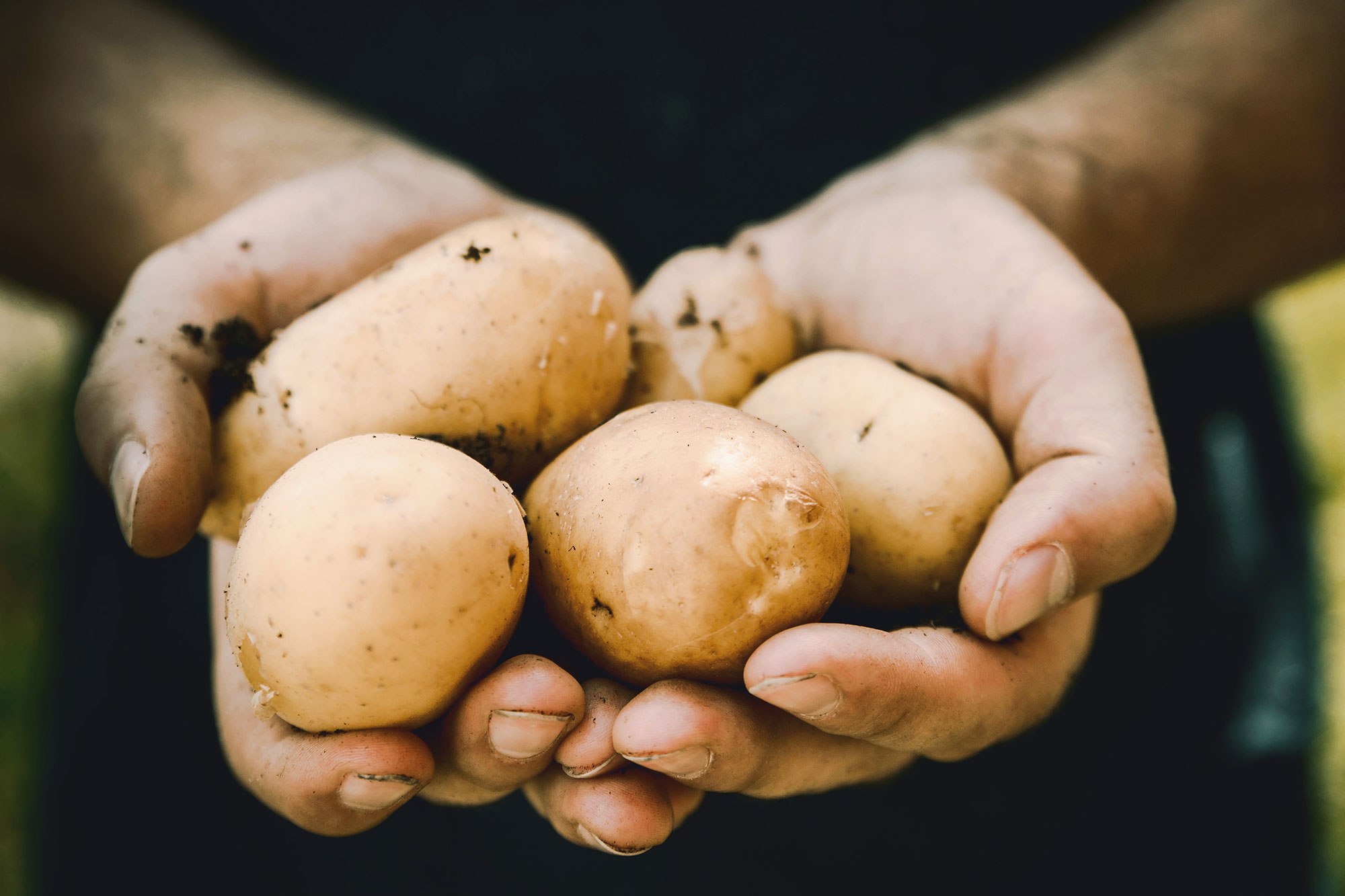 manos con patatas naturale