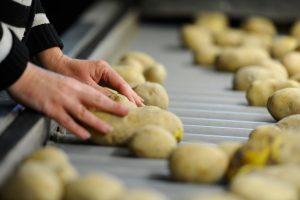 Manos que cojen patatas